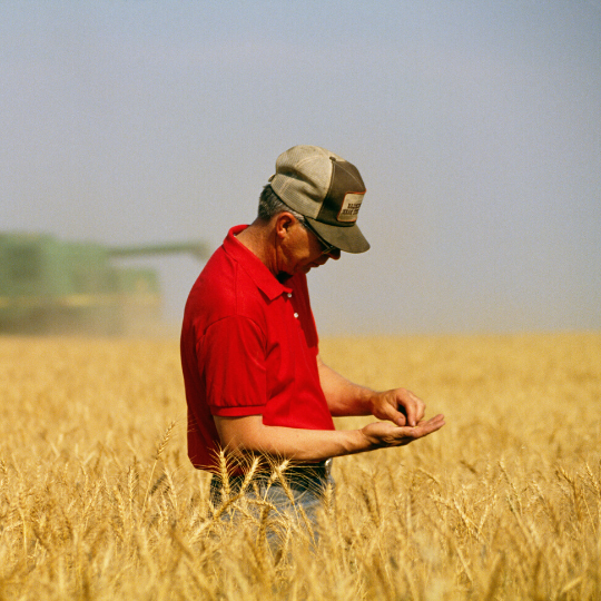 Crop Insurance - Stuart Surles - Man inspecting grain